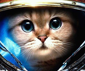 cat, space, and animal image