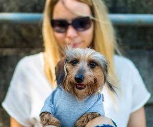daschund, dog, and dogtownphotography image