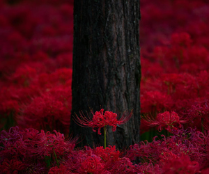 red and flower image