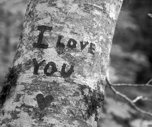 love, tree, and I Love You image