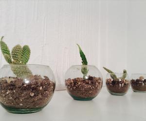 beautiful, cactus, and glass image