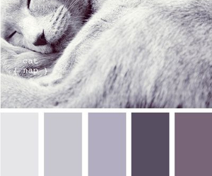 cats, color palette, and colors image