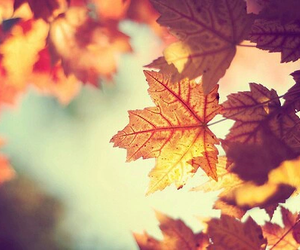 autumn, leaves, and September image