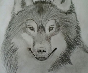 animal, artist, and delineation image