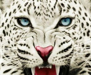tigre, sigueme, and ale135 image