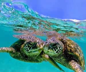turtle, animals, and summer image