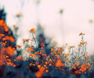 nature, flowers, and autumn image