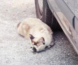cat, kitty, and figueira da foz image