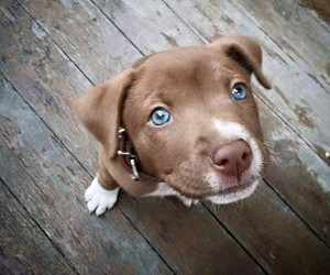 dogs and puppy image