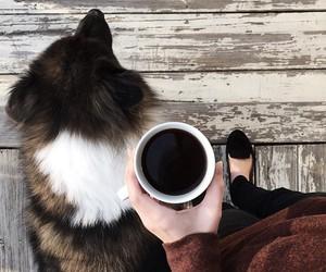 coffee, dog, and black image