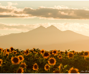 sunflower, mountains, and summer image