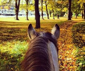 autumn, horse, and season image