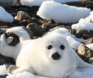 animals, seals, and cute image