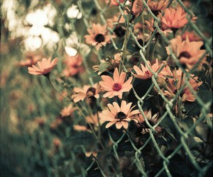 flowers, photography, and nature image