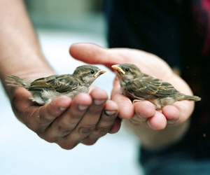 bird, cute, and hands image