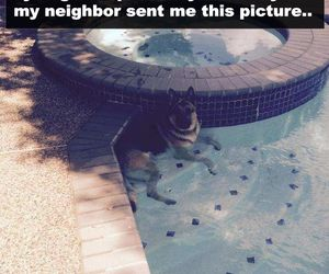 dog, funny, and pool image