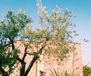 lake, olive, and summer image