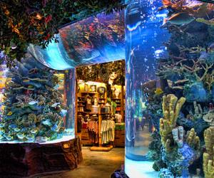 aquarium, fish, and photography image