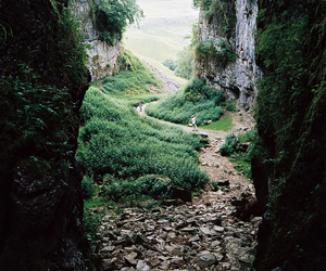 nature, photography, and green image