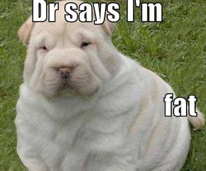 dog, funny, and fat image