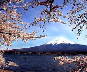 asia, asian, and cherry blossoms image