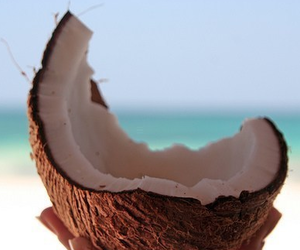 beach, coconut, and colourful image