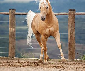 animals, freedom, and palomino image