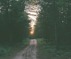 indie, forest, and nature image