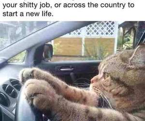 cat, funny, and job image