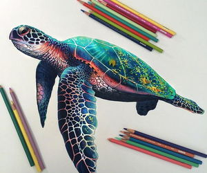 drawing, art, and turtle image