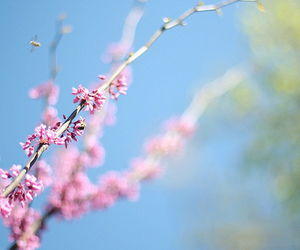 flowers, bee, and sky image