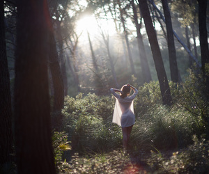 photography, beautiful, and forest image