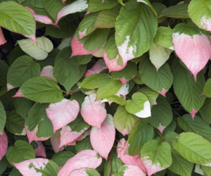 pink, leaves, and nature image