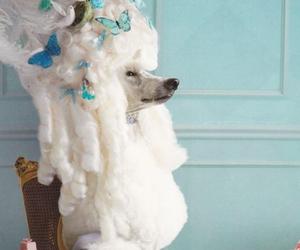 poodle, dog, and pastel image