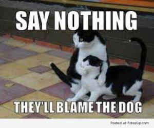 cat, funny, and dog image