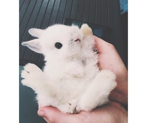 bunny, cute, and animal image