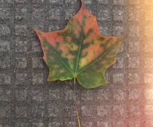 fall, inspire, and leave image