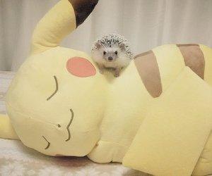 animal, hedgehog, and kawaii image