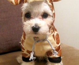 dog, cute, and giraffe image