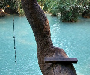 summer, water, and tree image