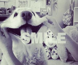 dog and smile image