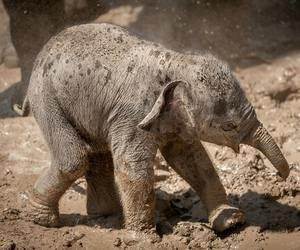 baby animals, cute animals, and elephants image