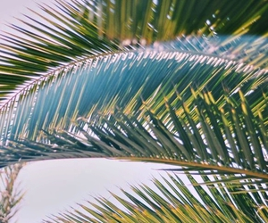 palm trees and plants image