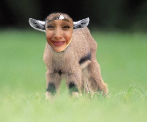 baby goat and ariana grande image