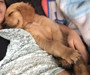 adorable, baby, and cuddles image
