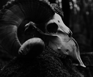 skull, black and white, and animal image