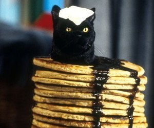 salem, cat, and food image