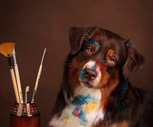 dog, animal, and paint image
