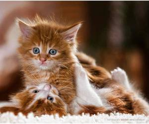 cat, kitten, and cute animals image