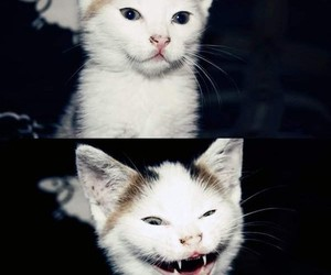 :), pussy, and scary face image